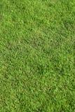 Configuration d'herbe Image libre de droits