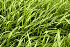 Configuration d'herbe Photos libres de droits