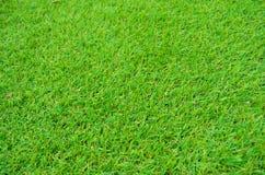 Configuration d'herbe verte Images libres de droits