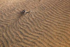 Configuration dans le sable Photos stock