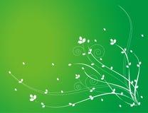 Configuration de fleur blanche à l'arrière-plan vert illustration libre de droits