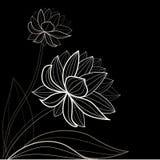 Configuration de fleur noire Images libres de droits