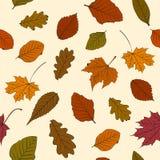 Configuration de lames d'automne Image libre de droits