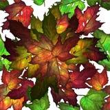 Configuration de lames d'automne Images stock