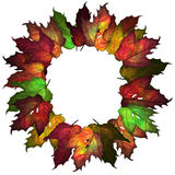 Configuration de lames d'automne Image stock
