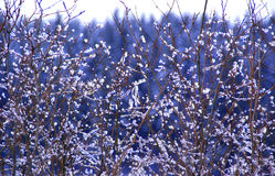 Configuration de neige sur le saule Photos libres de droits
