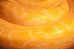 Configuration de peau de serpent de faune Images libres de droits