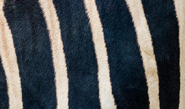 Configuration de peau de zèbre Image libre de droits