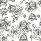 Configuration de Rose illustration stock