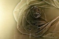 Configuration de Rose sur le fond en laiton brillant Photo libre de droits