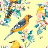 Configuration de source Branchement fleurissant Modèle d'aquarelle de loriot et d'oiseau de Blanc-oeil Abeilles, guêpe watercolor Image stock