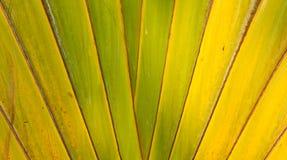 Configuration de ventilateur de banane Images libres de droits