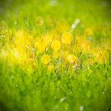 configuration de vert d'herbe Photo libre de droits