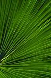 Configuration en feuille de palmier Photos stock