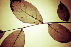 Configuration florale de cru Image stock