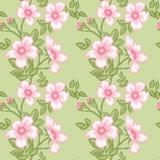 Configuration florale sans joint Photos stock