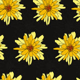 Configuration florale sans joint avec le chrysanthemum Photographie stock libre de droits