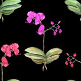 Configuration florale sans joint Fond botanique Illustration d'aquarelle des fleurs de rose d'orchid?e illustration de vecteur