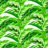 Configuration florale tropicale Photos libres de droits