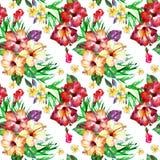 Configuration florale tropicale L'aquarelle peinte fleurit le plumeria Frangipani exotique blanc de fleur répétant le contexte images stock