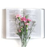 Configuration plate : Bible et rose, bouquet rouge et rose de fleur Sur le fond blanc photo stock