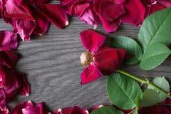 Le Petale Fane De Coeur S Est Leve Photo Stock Image Du Coeurs