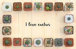 Configuration plate des usines de cactus dans le pot Images stock