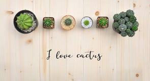 Configuration plate des usines de cactus dans le pot Photos stock