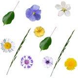 Configuration sans joint avec des fleurs et des lames Image libre de droits