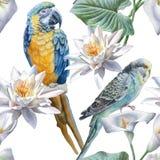 Configuration sans joint avec des fleurs et des oiseaux Image libre de droits