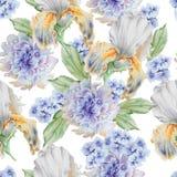 Configuration sans joint avec des fleurs iris Pivoine Illustration d'aquarelle Image libre de droits