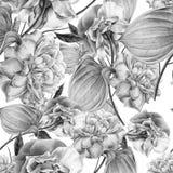 Configuration sans joint avec des fleurs Rose Anthure Illustration d'aquarelle Image stock