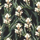 Configuration sans joint avec des orchidées Illustration d'aquarelle d'aspiration de main Image libre de droits