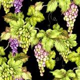 Configuration sans joint avec des raisins Illustration d'aquarelle d'aspiration de main Photo libre de droits