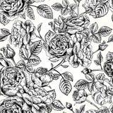 Configuration sans joint avec des roses Photographie stock libre de droits