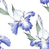 Configuration sans joint avec l'iris Illustration d'aquarelle d'aspiration de main Photo stock