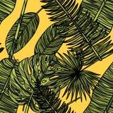 Configuration sans joint avec les lames tropicales Photographie stock libre de droits