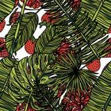 Configuration sans joint avec les lames tropicales Image libre de droits