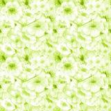 Configuration sans joint Couleur de cerise le branchement fleurit sakura Image de ressort Illustration d'aquarelle Élément de con illustration stock