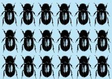 Configuration sans joint de coléoptères Photo stock