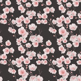 Configuration sans joint de fleur de cerise Photographie stock