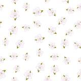 Configuration sans joint de fleur de cerise Images stock