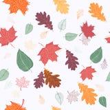 Configuration sans joint de lames d'automne Photos stock