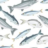 Configuration sans joint de poissons Maquereau, saumon, sardine, dorado illustration stock