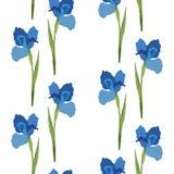 Configuration sans joint de vecteur Iris bleu de fleurs Bannière romantique de fond Photographie stock libre de droits