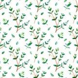 Configuration sans joint florale Branches d'eucalyptus illustration stock