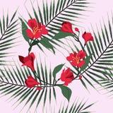 Configuration sans joint florale de vecteur Le rouge fleurit l'alstromeria Drapeau de cru illustration libre de droits