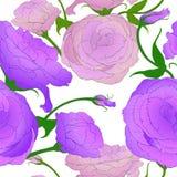 Configuration sans joint Retrait de vecteur Eustoma - fleurs et bourgeons Composition décorative - un bouquet des fleurs wallpape Image libre de droits