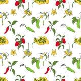 Configuration sans joint végétale Concombres, tomates et poivrons sur le fond blanc illustration stock