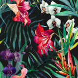 Configuration tropicale Photo libre de droits